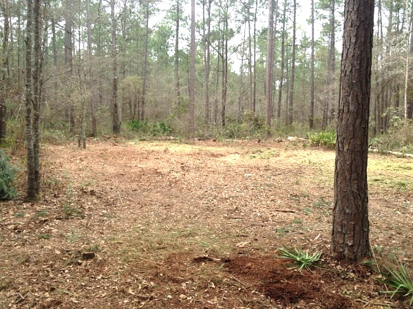 Click image for larger version  Name:Cleared Land.jpg Views:514 Size:97.6 KB ID:572
